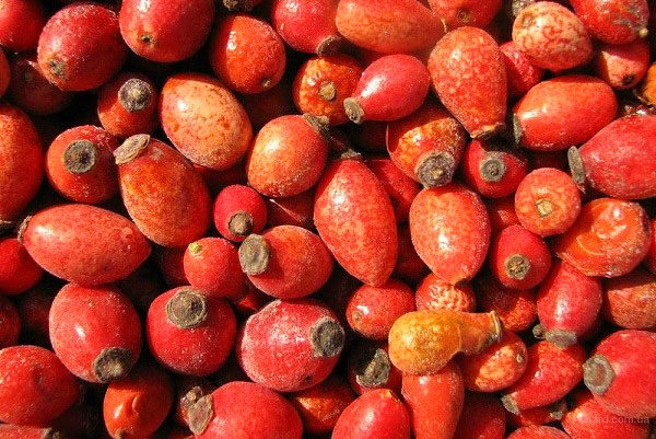 Mežrozītes augļi